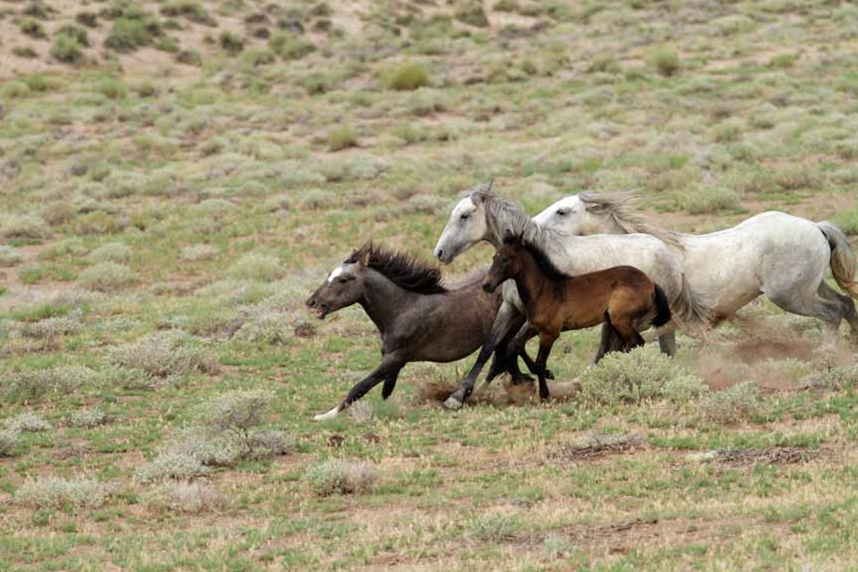 wild horses paradox valley southwest colorado