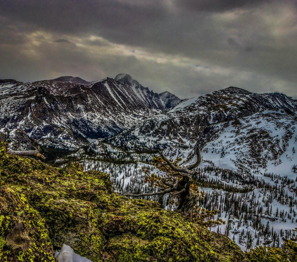rocky mountain bristlecone pine glacier gorge