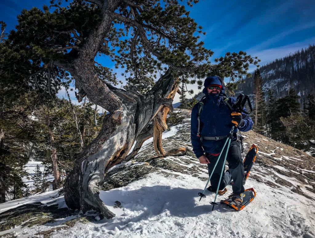 rocky mountain bristlecone pine snowshoeing