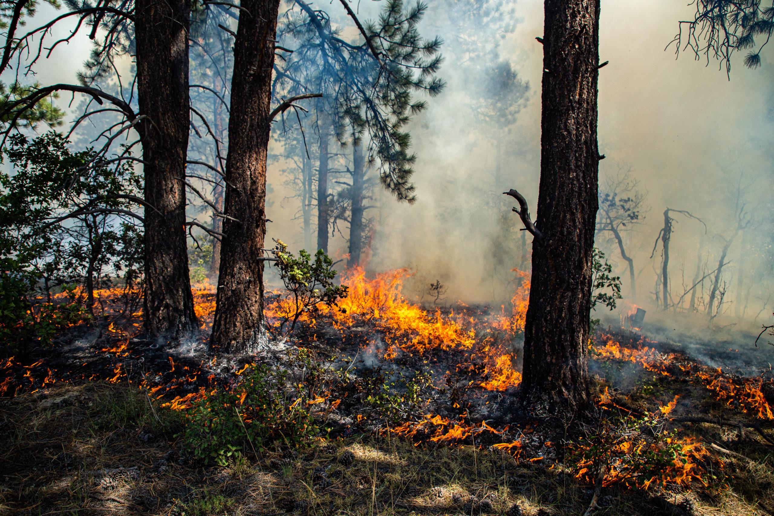 wildfire surface fire southwest colorado pagosa springs