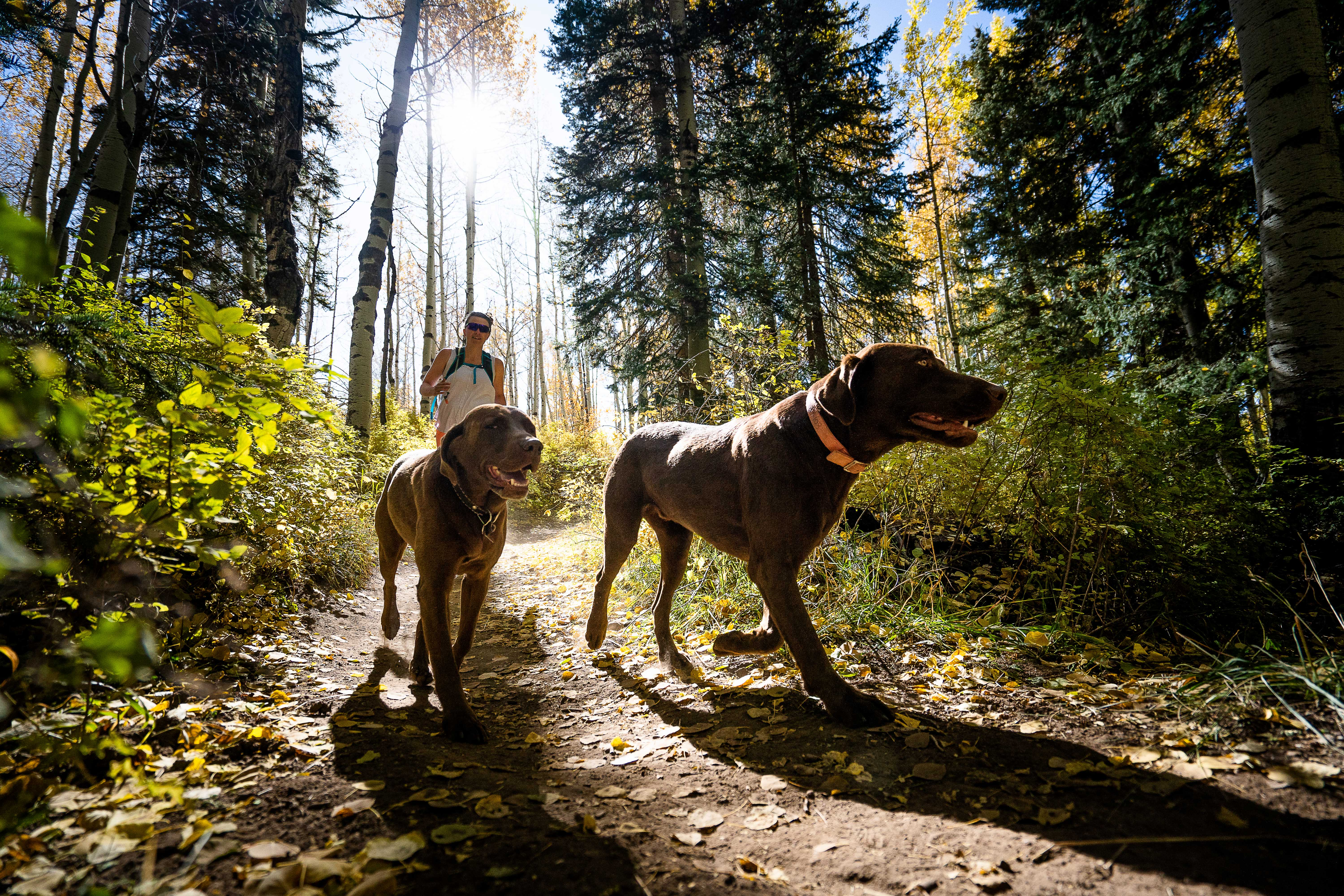 trail dogs trail etiquette running fall