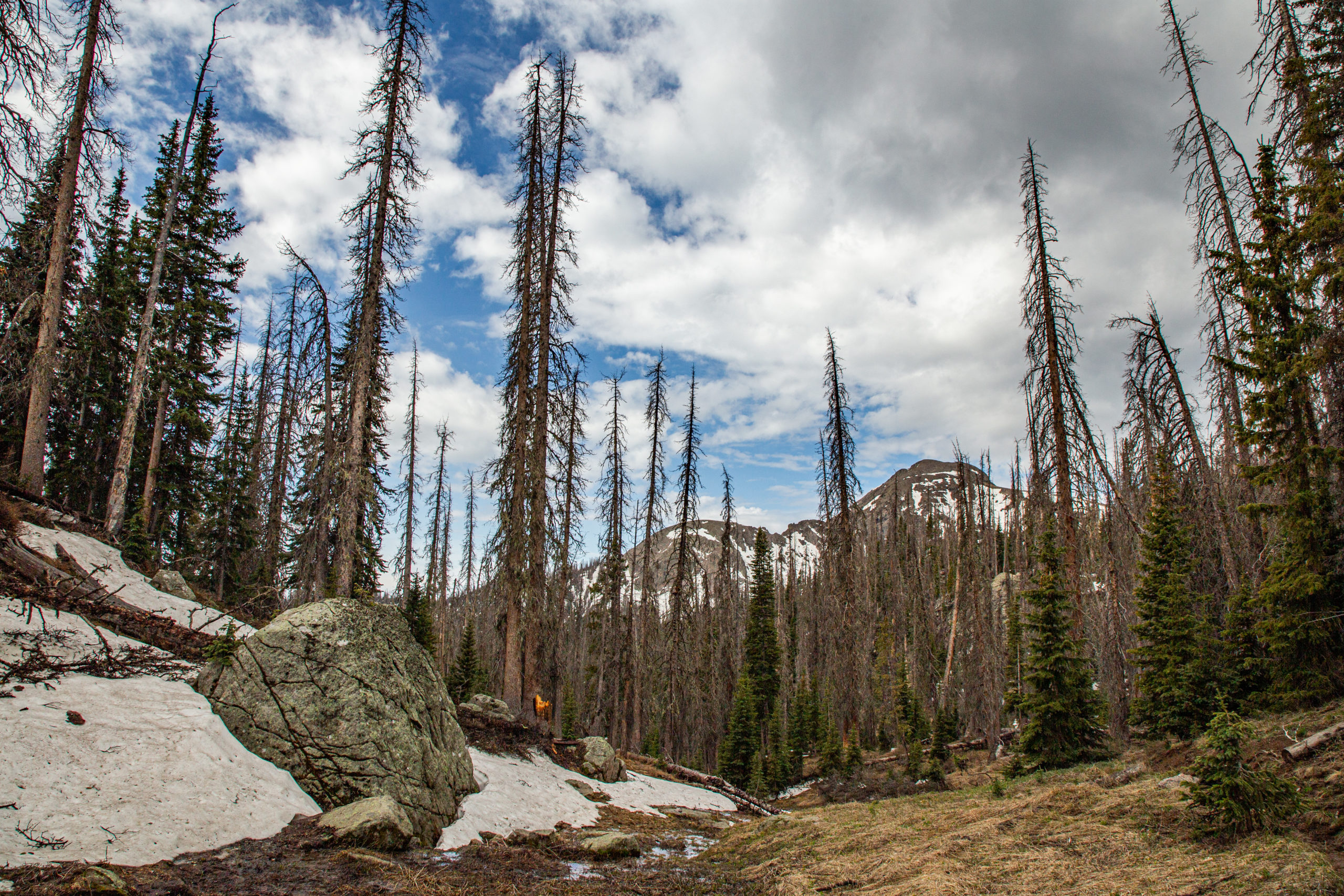 spring forest wolf creek pass colorado beetle kill